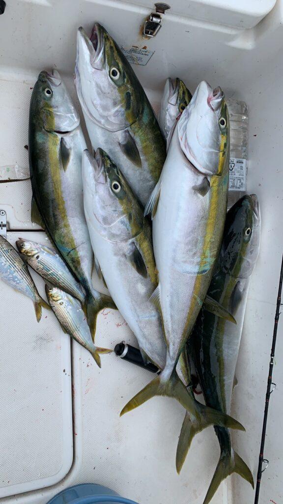 2021年 高松沖 屋島湾 ブリ コノシロ飲ませ釣り